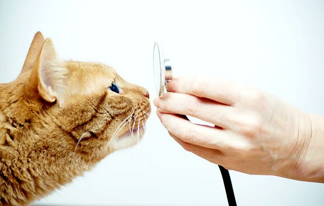 як вилікувати кішку