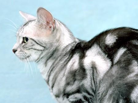 як лікувати кошенят від бліх фото