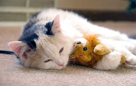як лікувати у кішок нежить