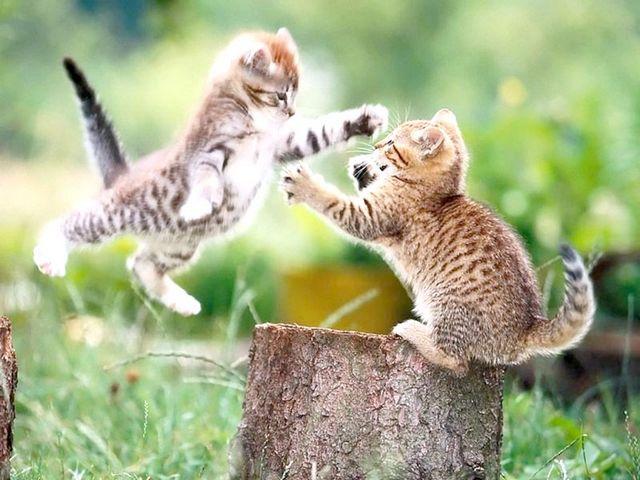 як вилікувати нежить у кошеняти