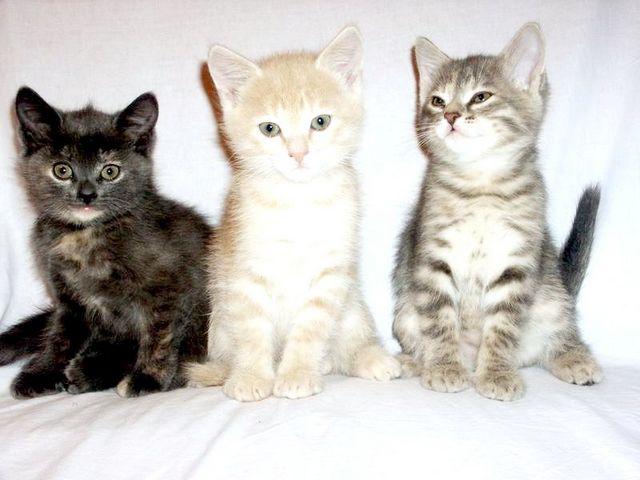 Як лікувати кошеня від застуди