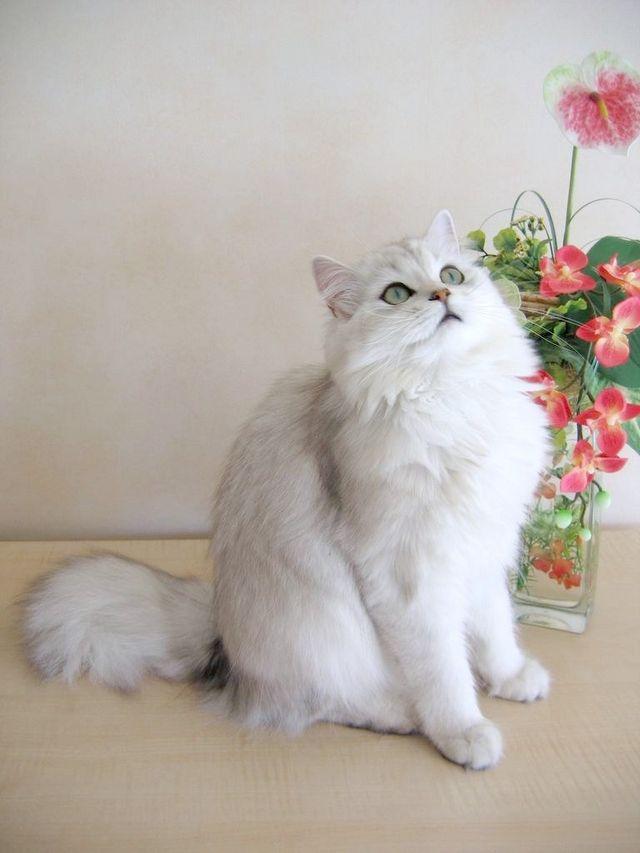 лікування нирок у кішок