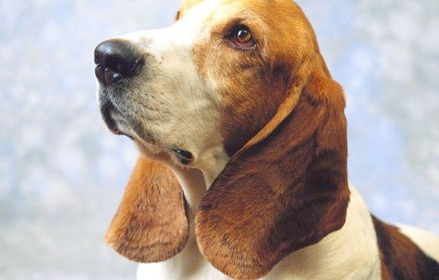 лікування гастриту у собак