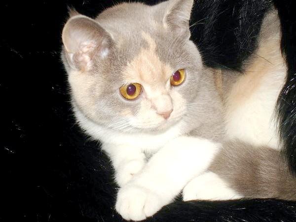 чи можна мити двомісячного кошеня шампунем