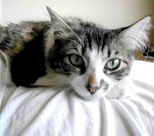 каклечітьрани у кота