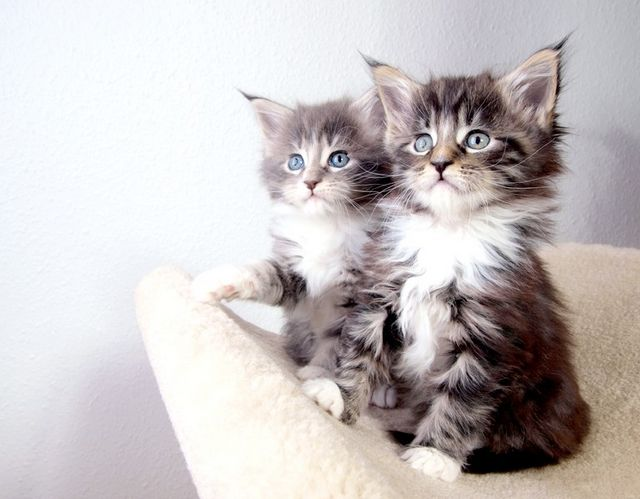 як визначити кіт чи кішка ?!