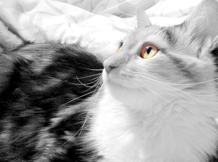 Як визначити, кошеня - дівчинка чи хлопчик