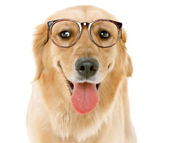 як дізнатися який пароди собака