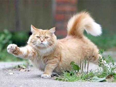Як відучити кота мітити територію