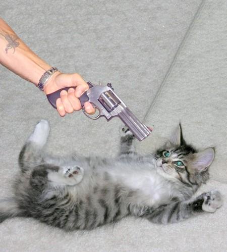 Як відучити кота гадити де попало