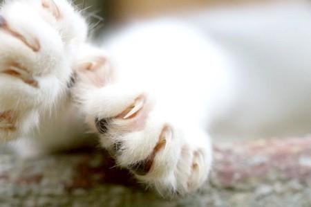 як зробити царапка для кішки своїми руками