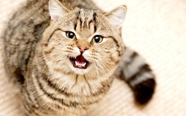 Навіщо каструвати котів