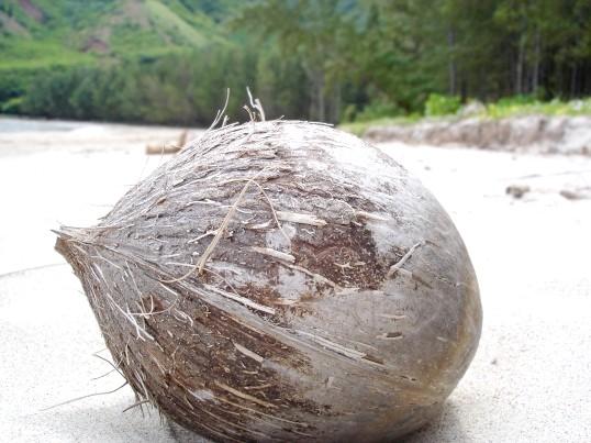 Як з'їсти кокос