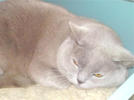 як лікувати вушних кліщів у кішок домашніми засобами