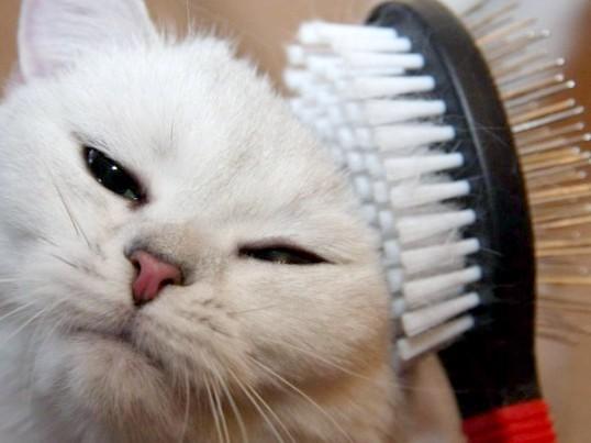 доглядати за кішкою