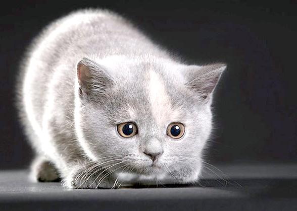 як вибрати здорового кошеня