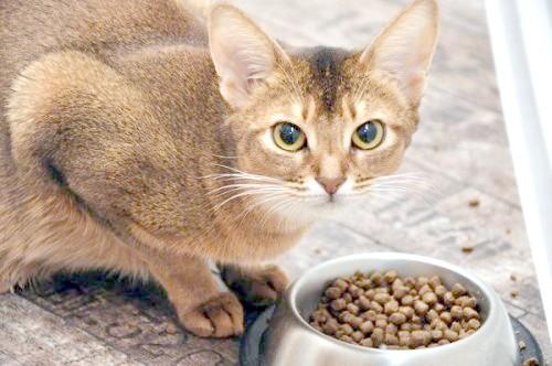 як відучити кішку дряпати шпалери