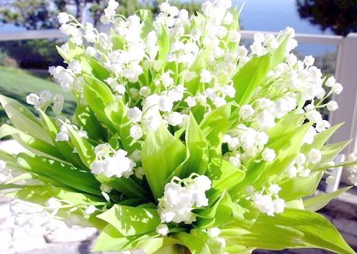 Як замовити доставку квітів