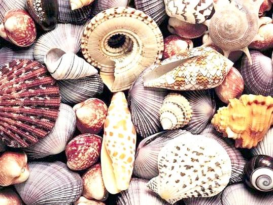 Як робити вироби з морських черепашок