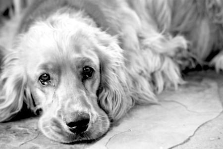 промити собаці шлунок