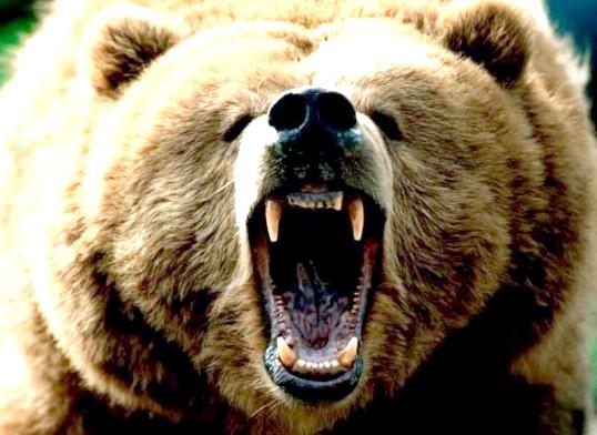 Як відлякати ведмедя