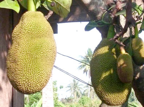 Як привезти фрукти з Таїланду