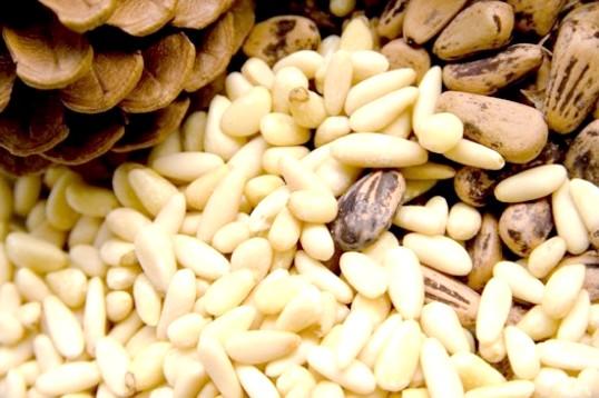Як варити кедрові горіхи