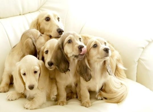 Як вивести запах собаки