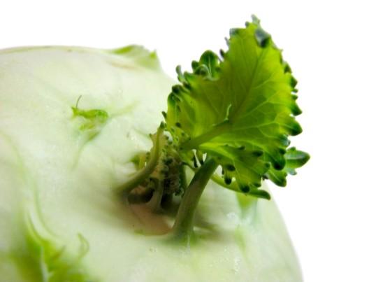 Як зберігати капусту кольрабі