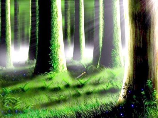 Як визначити в лісі сторони світу