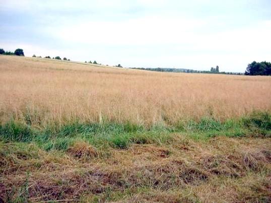 Як переоформити земельний пай