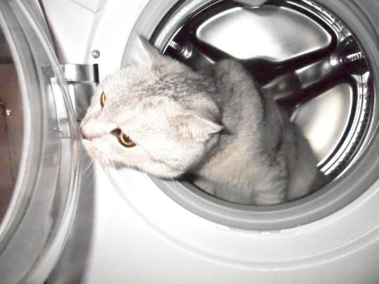 Як розібрати пральну машину