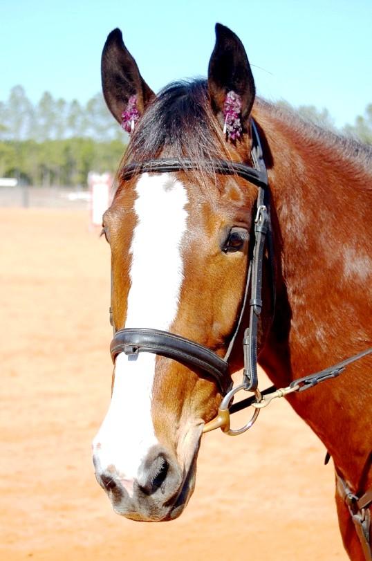 Як зробити маску коня
