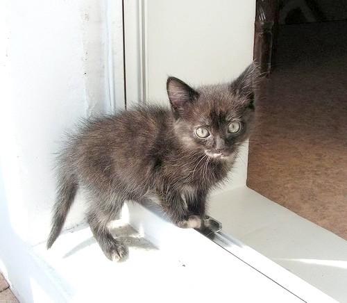 Як вилікувати кішку від проносу