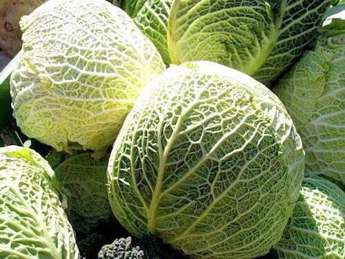 Як зберігати савойскую капусту