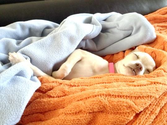 Як зупинити понос у собаки